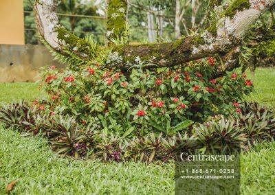 Centrascape - Charming Bangalow - 04