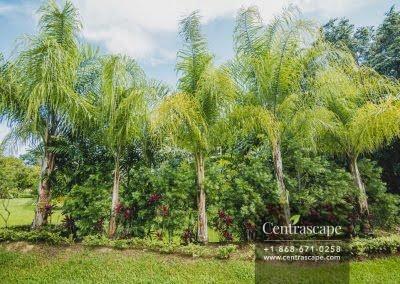 Centrascape - Charming Bangalow - 18