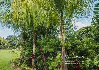 Centrascape - Charming Bangalow - 20