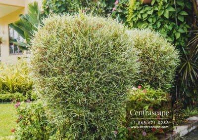 Centrascape - Charming Bangalow - 23