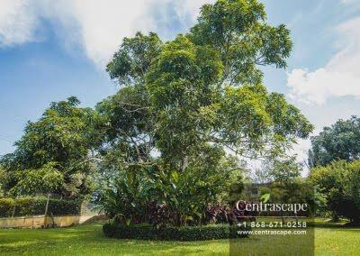 Centrascape - Charming Bangalow - 31