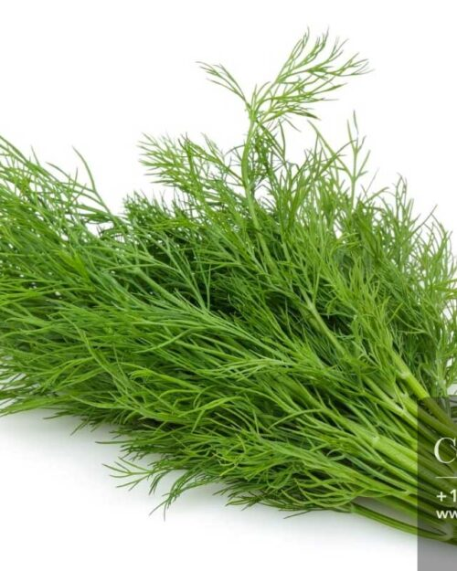 Centrascape - Herbs - Dill