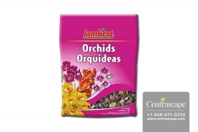 Centrascape -Lambert Orchids Mix