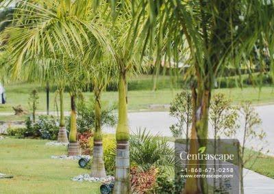 Centrascape - Modern Splendor - 24