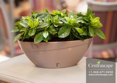 Centrascape - Pots - Calipso 2