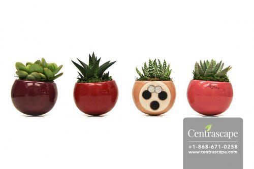 Centrascape---Pots---Merlot 1