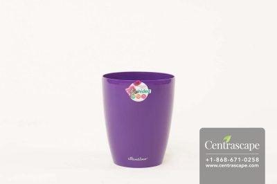 Centrascape - Pots - Orchidea