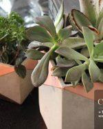 Centrascape - Pots - Smooth Cement Planter