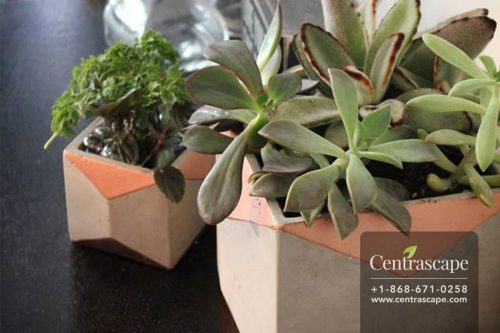 Centrascape - Pots - Smooth Cement Planter