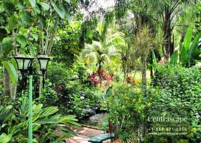 asian garden 1