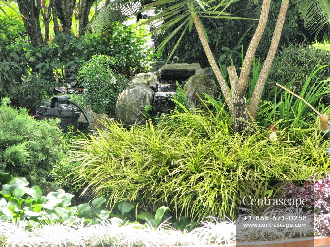 Centrascape - Asian Inspired Tropical Garden
