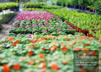 Centrascape Nursery