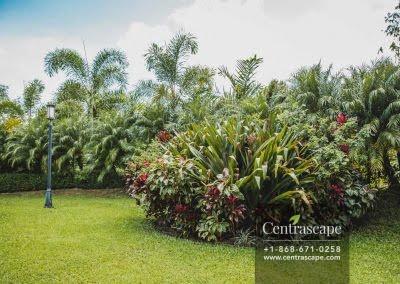 Centrascape - Charming Bangalow - 06