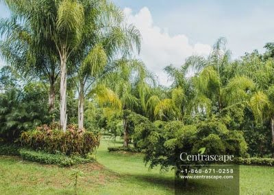 Centrascape - Charming Bangalow - 13