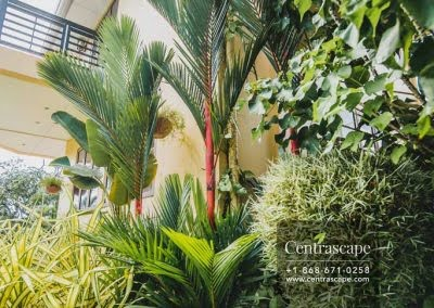 Centrascape - Charming Bangalow - 15