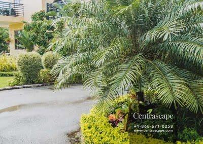 Centrascape - Charming Bangalow - 22