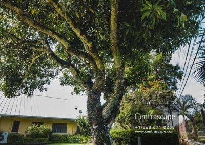Centrascape - Charming Bangalow - 32
