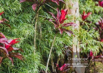 Centrascape - Charming Bangalow - 34