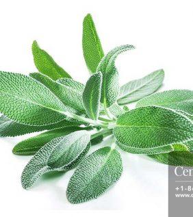 Centrascape - Herbs - Sage