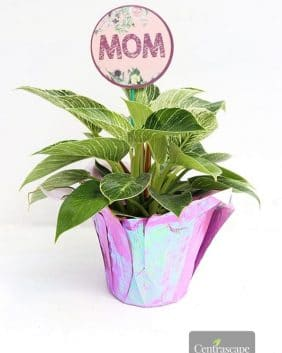 Centrascape - Houseplants - Berkin