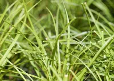 Centrascape - Houseplants - Ponytail Palm 2