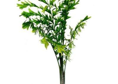 Centrascape - Palms - Fishtail 1