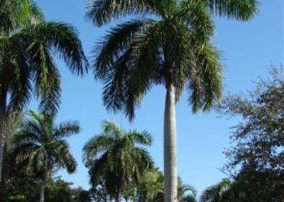 Centrascape - Palms - Royal 1