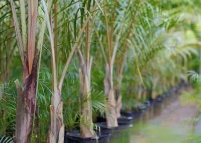 Centrascape - Palms - Spindle 1