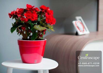 Centrascape - Pots - Asti 1