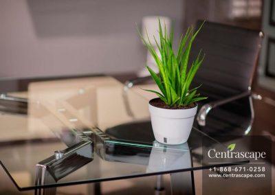 Centrascape - Pots - Asti 2