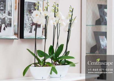 Centrascape - Pots - Calipso 8