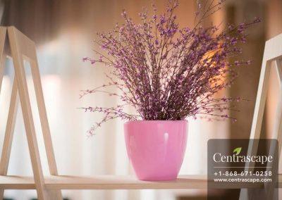 Centrascape - Pots - Deco 1