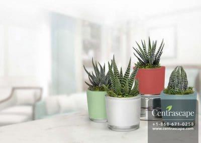 Centrascape---Pots---Espresso-Spring 1