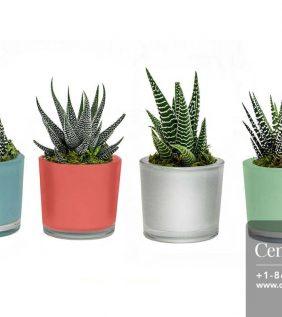 Centrascape---Pots---Espresso-Spring