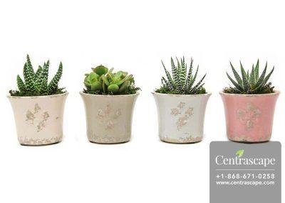 Centrascape---Pots---French-Lilly