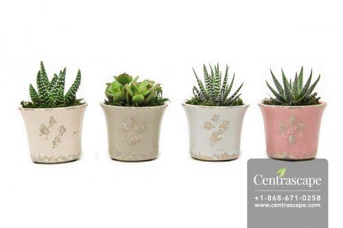 Centrascape---Pots---French-Lilly 1