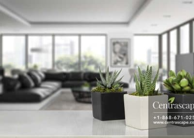 Centrascape---Pots---Moden-Cube 1