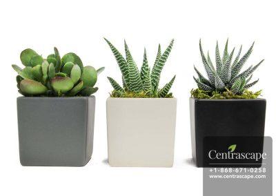 Centrascape---Pots---Moden-Cube