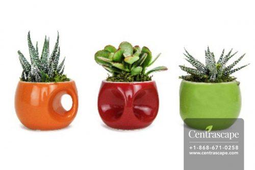 Centrascape---Pots---Nomad-Style-1
