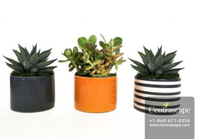 Centrascape---Pots---Nordic-4in-Collection