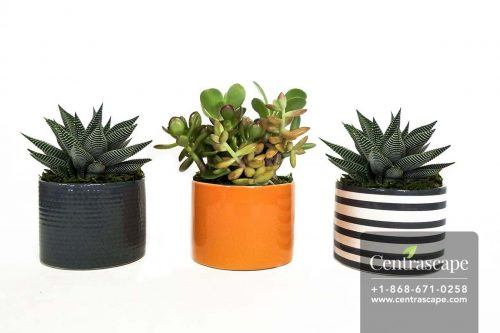 Centrascape---Pots---Nordic-4in-Collection 1