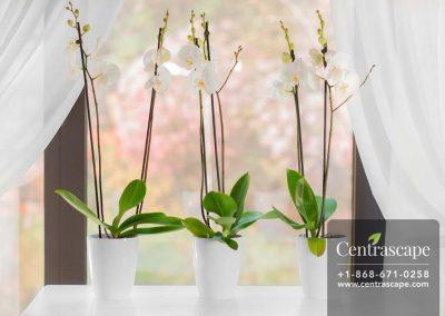 Centrascape - Pots - Orchidea 4