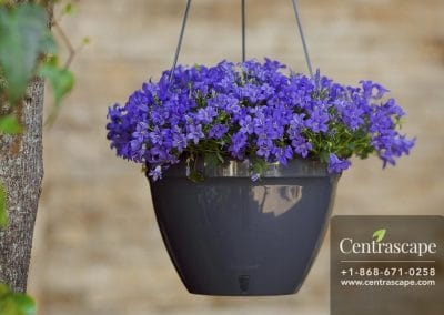 Centrascape - Pots - Orchidea 5