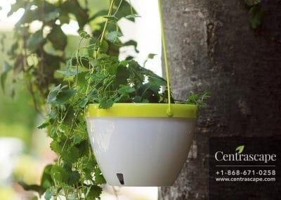 Centrascape - Pots - Orchidea 6