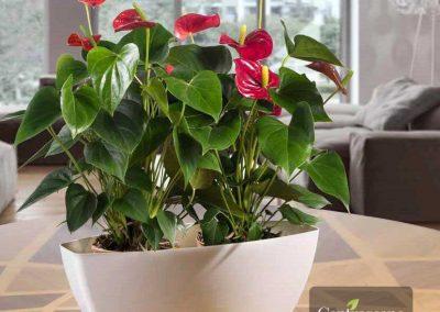 Centrascape - Pots - Rectangular Plastic Vase