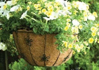 Centrascape - Pots - Round Daisy Hanging Basket 1