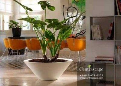 Centrascape - Pots - Transformative Planter