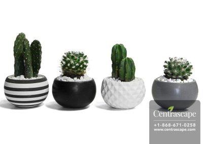 Centrascape---Pots---Urban-Life