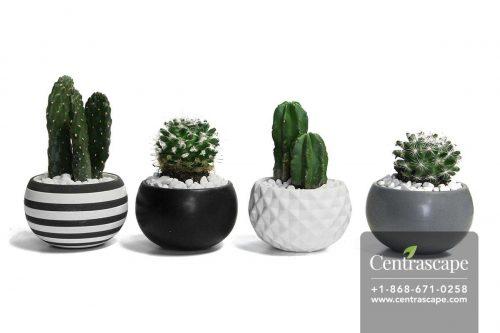Centrascape---Pots---Urban-Life 1