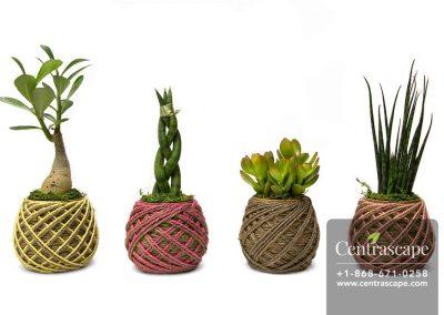 Centrascape---Pots---Yarn-of-Life